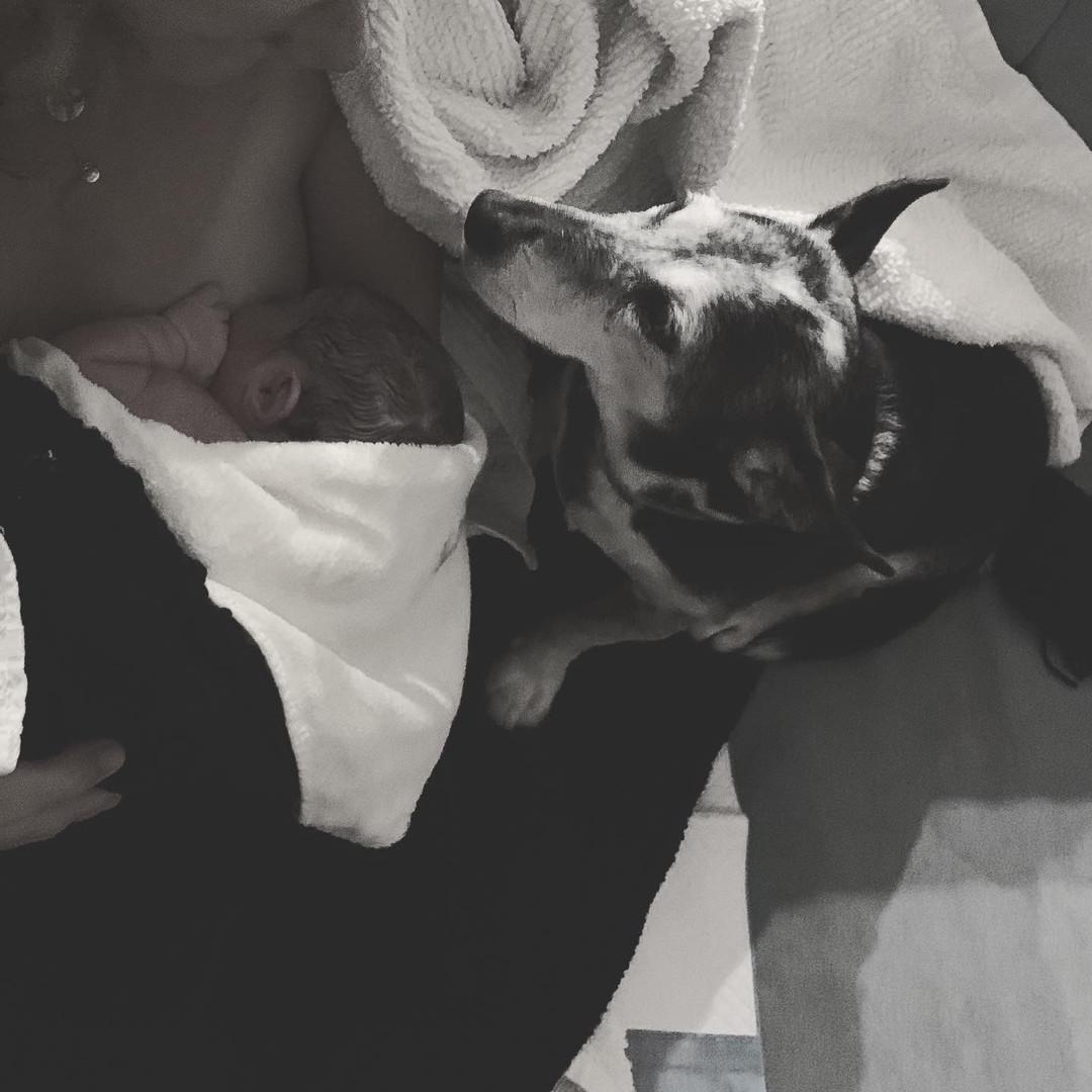 Dogs of homebirth.