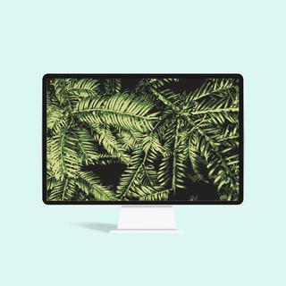 pine_computer.jpg