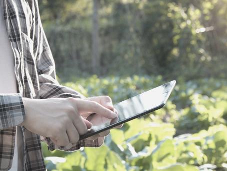 Pflanzensensoren – hilfreiche Tools?