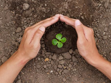 Carbon Farming – der Weg in die Zukunft?