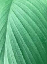 invigorating tropical design