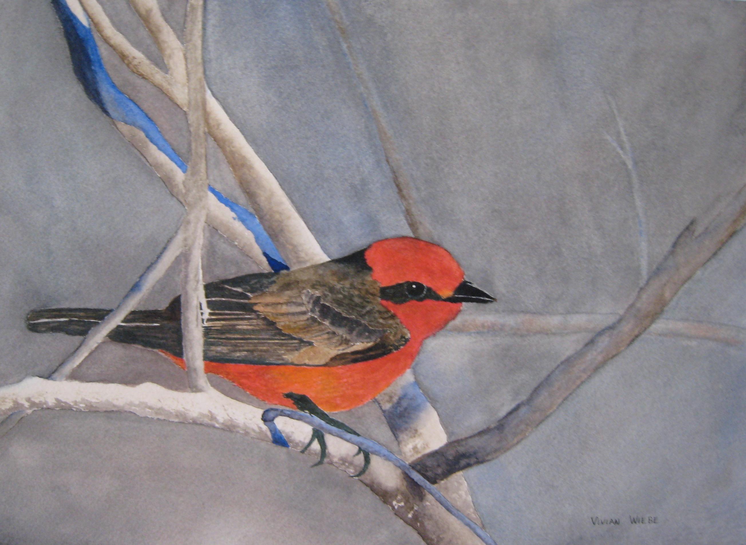 Vermilliion Flycatcher