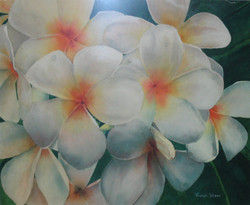 Bloomeria