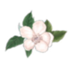 Flower for Boarder_5_edited.png