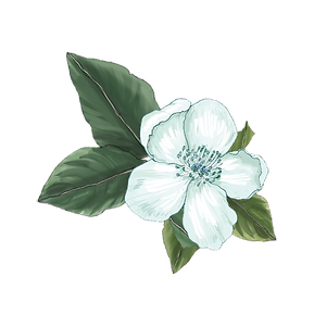 Flower for Boarder_4_edited.png