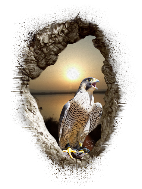 Peregrine 12x16 Template.png