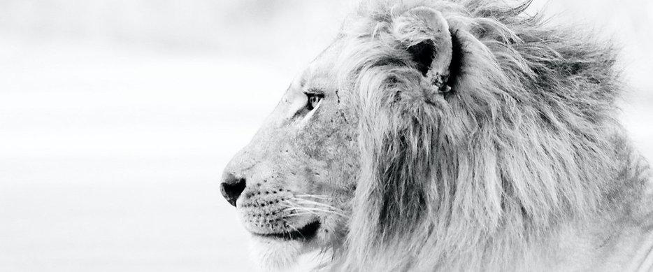 lion crop.jpg