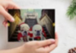 christmas card dogs.jpg