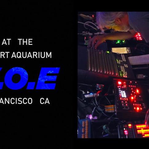 W.O.E. | Steinhart Aquarium | San Francisco