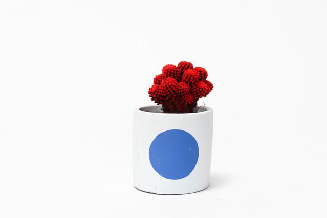 DG_RED_KC_PD_Blue (1).jpg