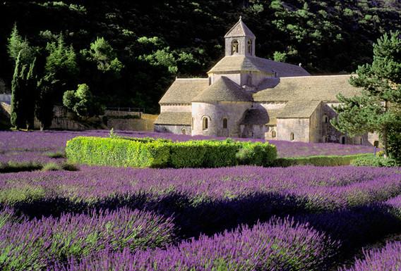 abbaye_de_senanque.jpg