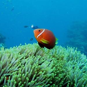 YoBuceo en Maldivas I