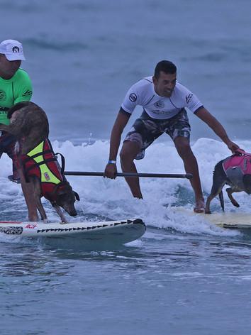 SurfDog SPSurf Camburi