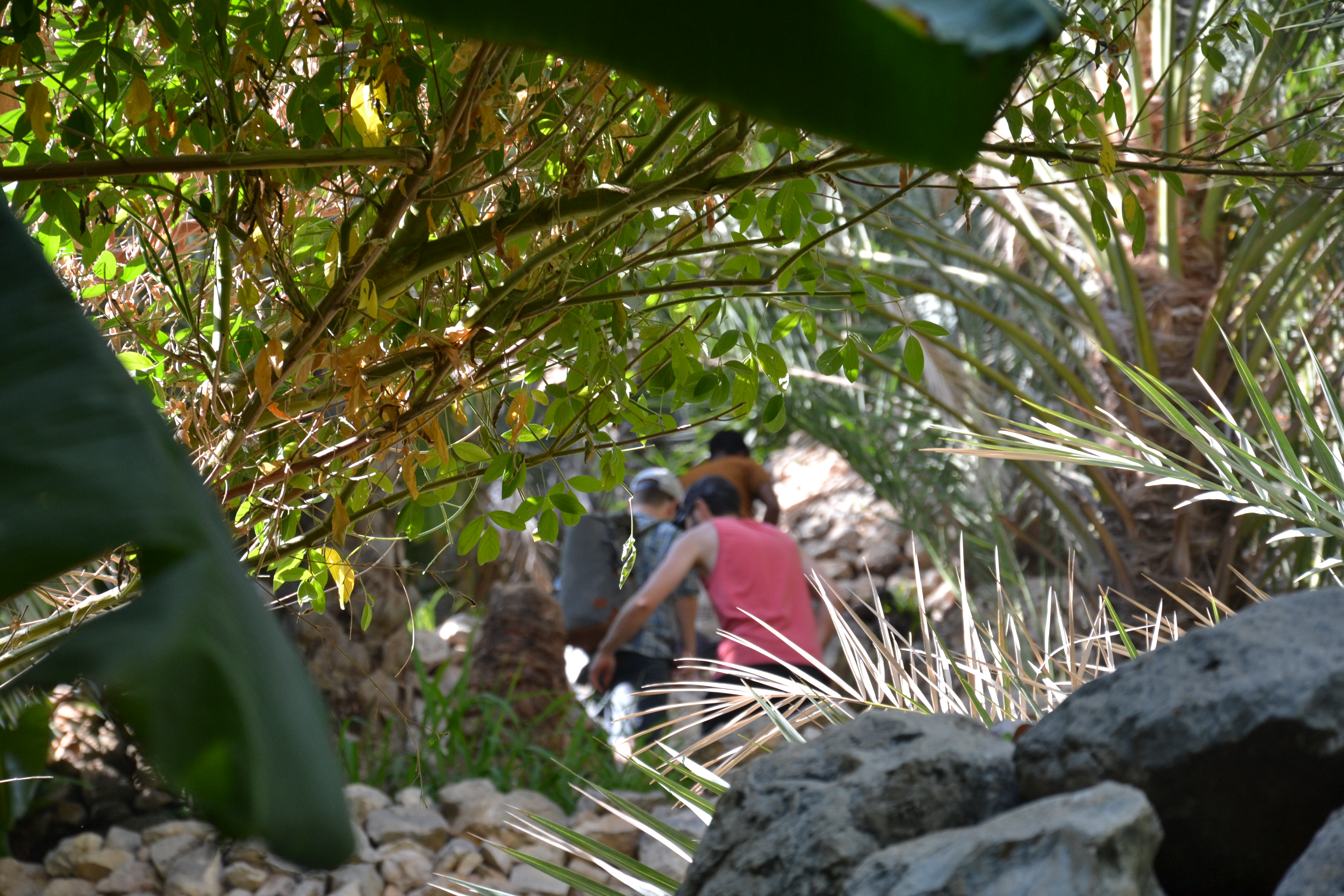 Tag 6 - Sur, Wadi Tiwi - Campen Wadi Tiwi (24)