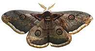 moth(edit).jpg