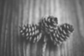 Kiefernzapfen