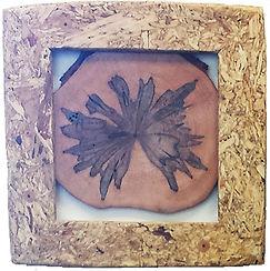 wood ambrosia 1.jpg