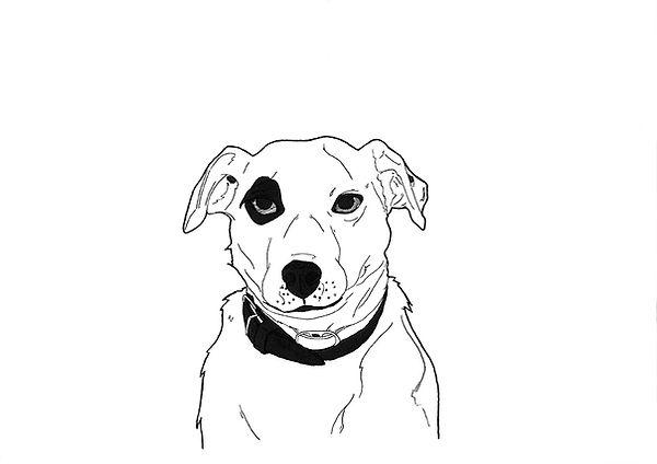 Adeck le chien de Christophe Dechavanne