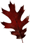 fall (14).png