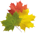 fall (2).png