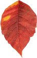 fall (9).png