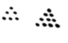 dotted triangles mendel.png
