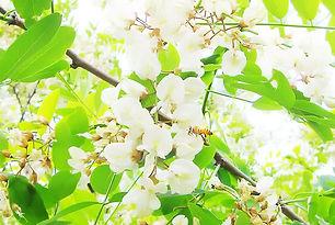 flowers_akashia.jpg