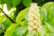 flowers_tochi.jpg