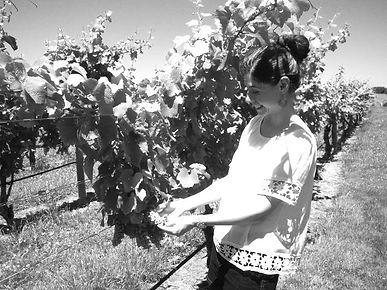 profile pic vineyard winery.jpg