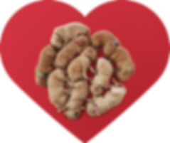 Sweetheart Goldendoodles Logo