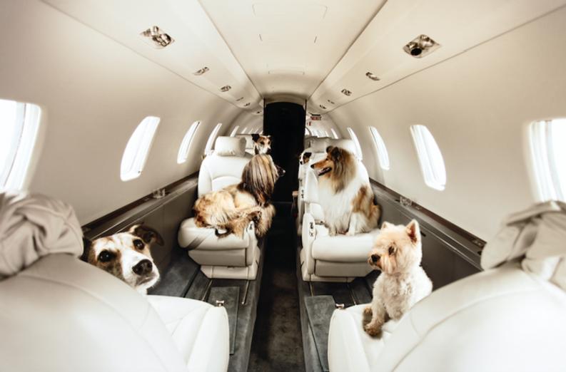 Fly Ortac Jersey Airport Flights Pet