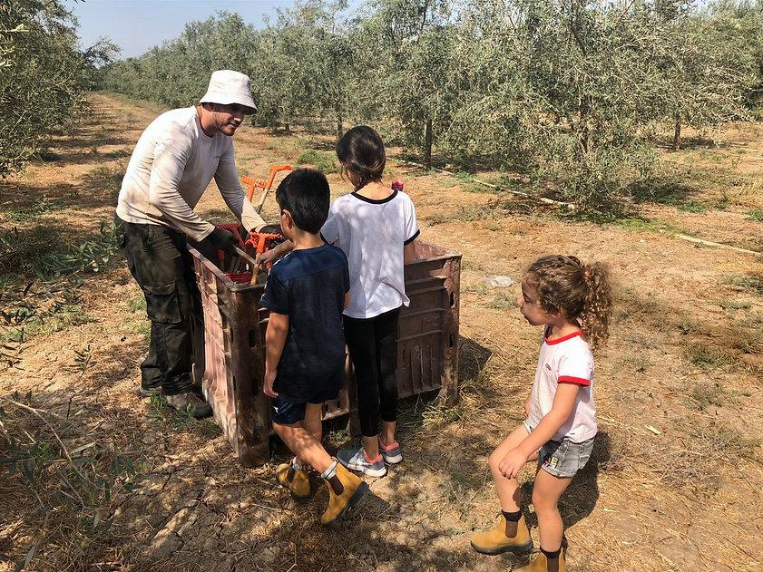 ילדים מבקרים במסיק הזיתים