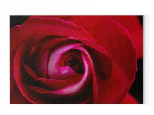 wunderschöne rote Rose  - Leinwand mit Keilrahmen