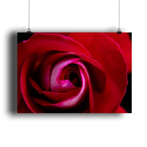 wunderschöne rote Rose  - DIN A3 Poster (querformat)