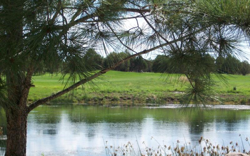 Pond-2013-1024x769-800x500.jpg
