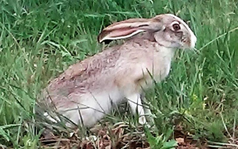 Jack-Rabbit-2-800x500.jpg