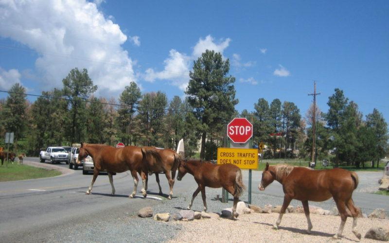 Horses-1-1024x768-800x500.jpg