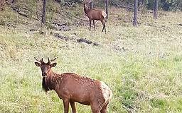 Amys-2-Elk-685x1024-800x500.jpg