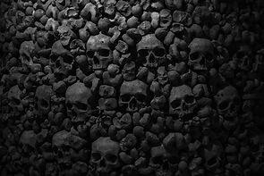 Collection of skulls and bones covered w