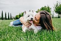 Superdog Solutions Reviews