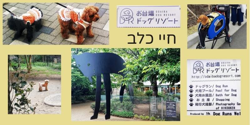 חיי כלב ביפן