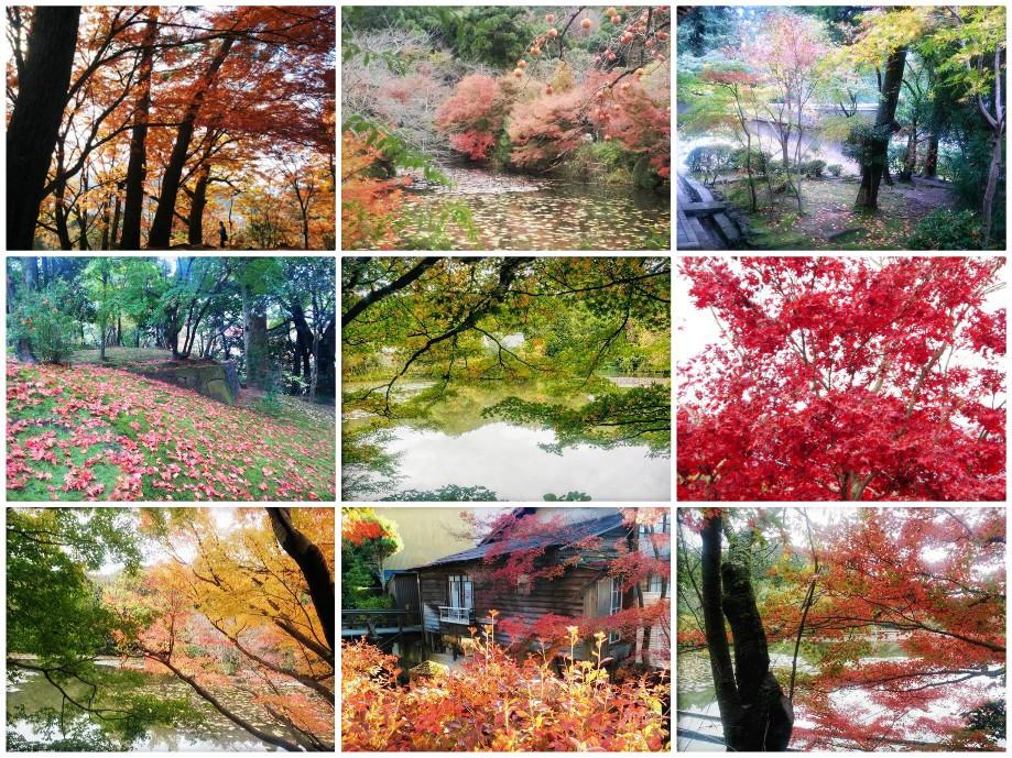 שלכת ביפן, צילום: תמר גרינברג