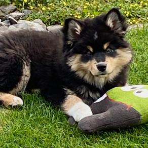 Surfurlaub mit Hund