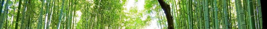 Bamboo%20outside_edited.jpg