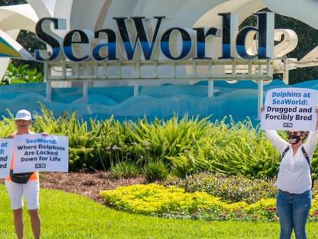 Boycott SeaWorld Day July 24th