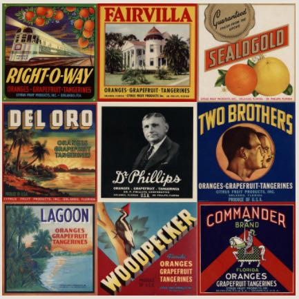 Labels from various products sold by Dr Philip Phillips