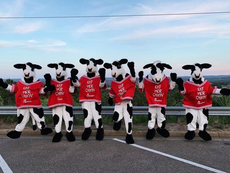 How to Become a Chik-Fil-A Cow