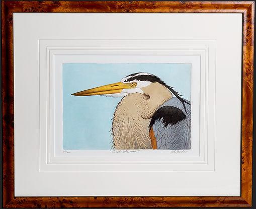 Great Blue Heron Etching