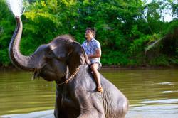 elephant edit-11 copy 2