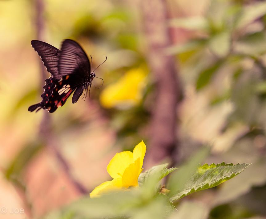 butterfly lightroom